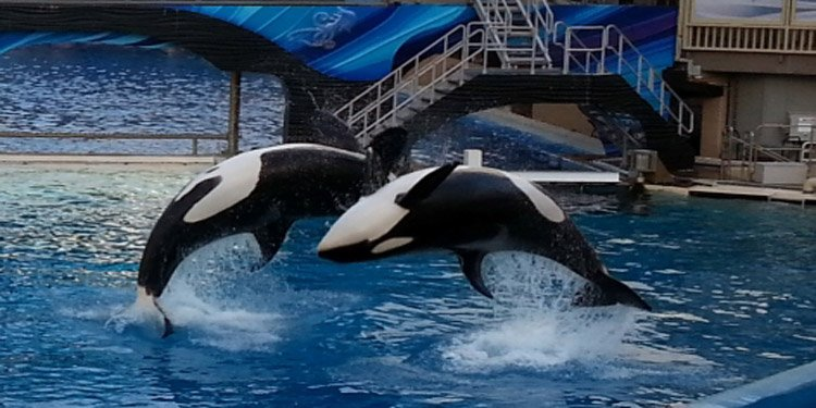 A Statement from SeaWorld