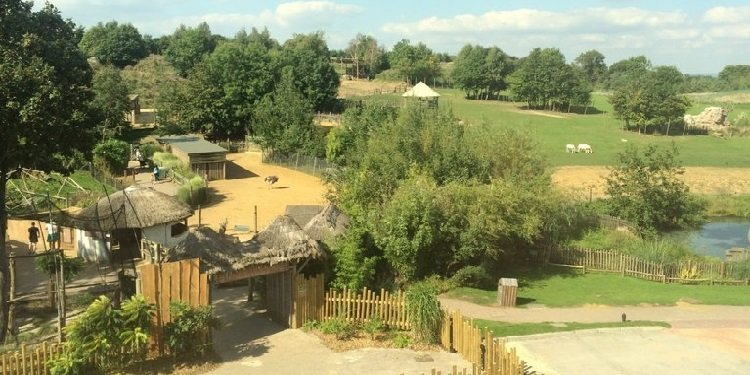 Report from Chessington World of Adventures!